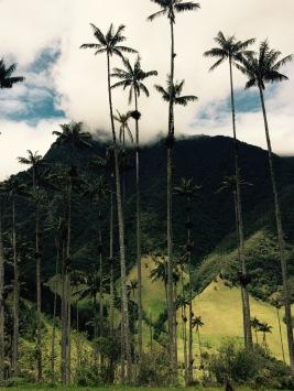 Valle de Cocora - Salento