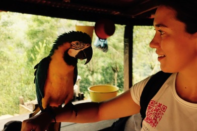 Parrot chit chat