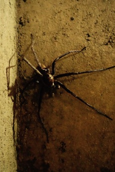 Ciudad Perdida: Spider of the size of my hand