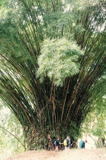 Ciudad Perdida: Bamboo